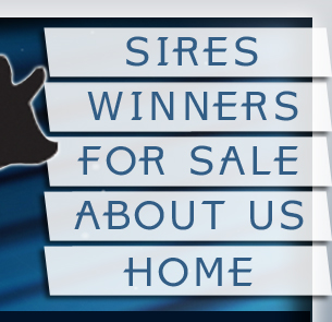 Sires - Winners - For Sale - About Us - Home